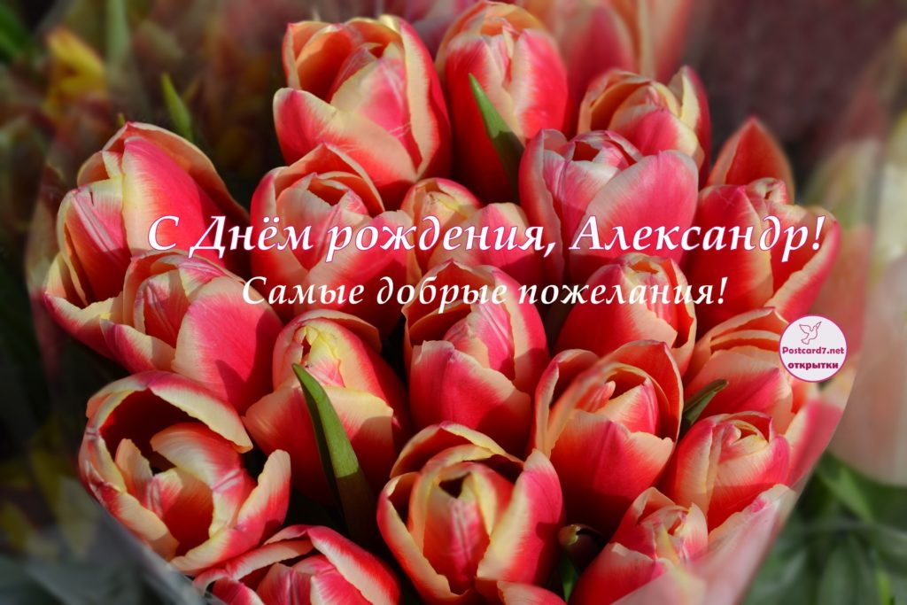 Открытка - букет тюльпанов - Александру с Днём рождения.
