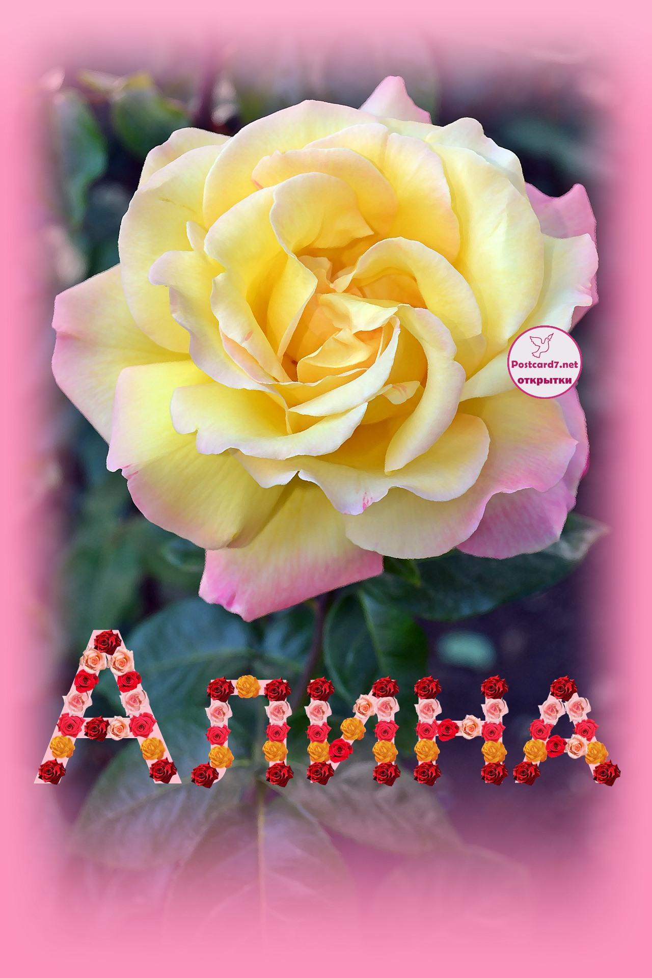 Алина, роза, именная открытка