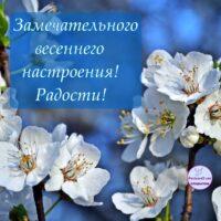 Весеннего настроения; открытка с цветущей веточкой