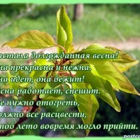 Весенняя открытка , зелёные листья, стихи