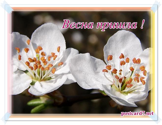 Весна пришла, открытка