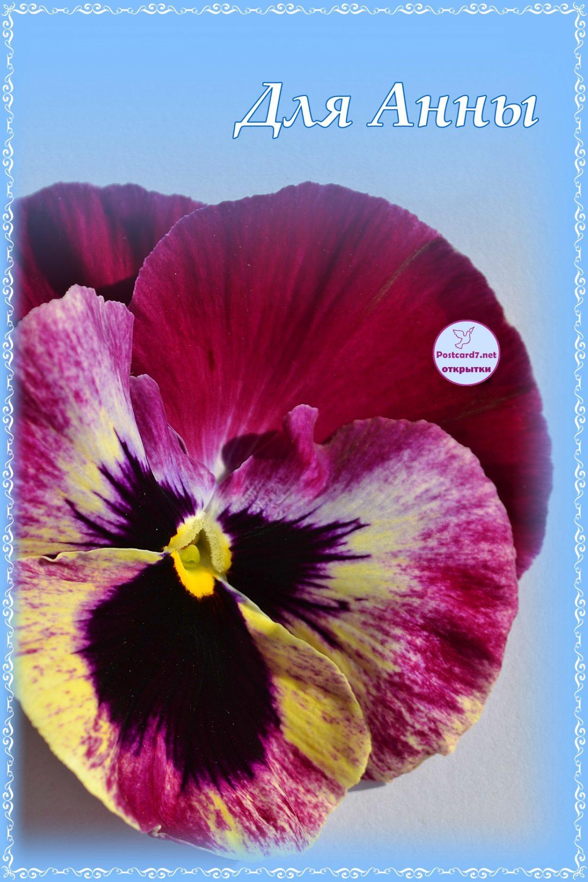 цветы для анны открытки высокие отношения