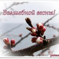Волшебной весны, открытка, бутоны абрикоса
