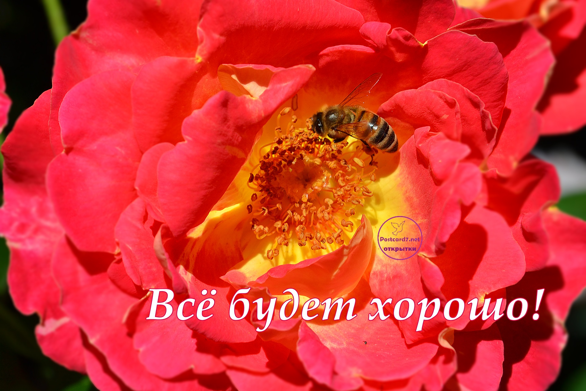 Всё будет хорошо, открытка с розой и пчелой