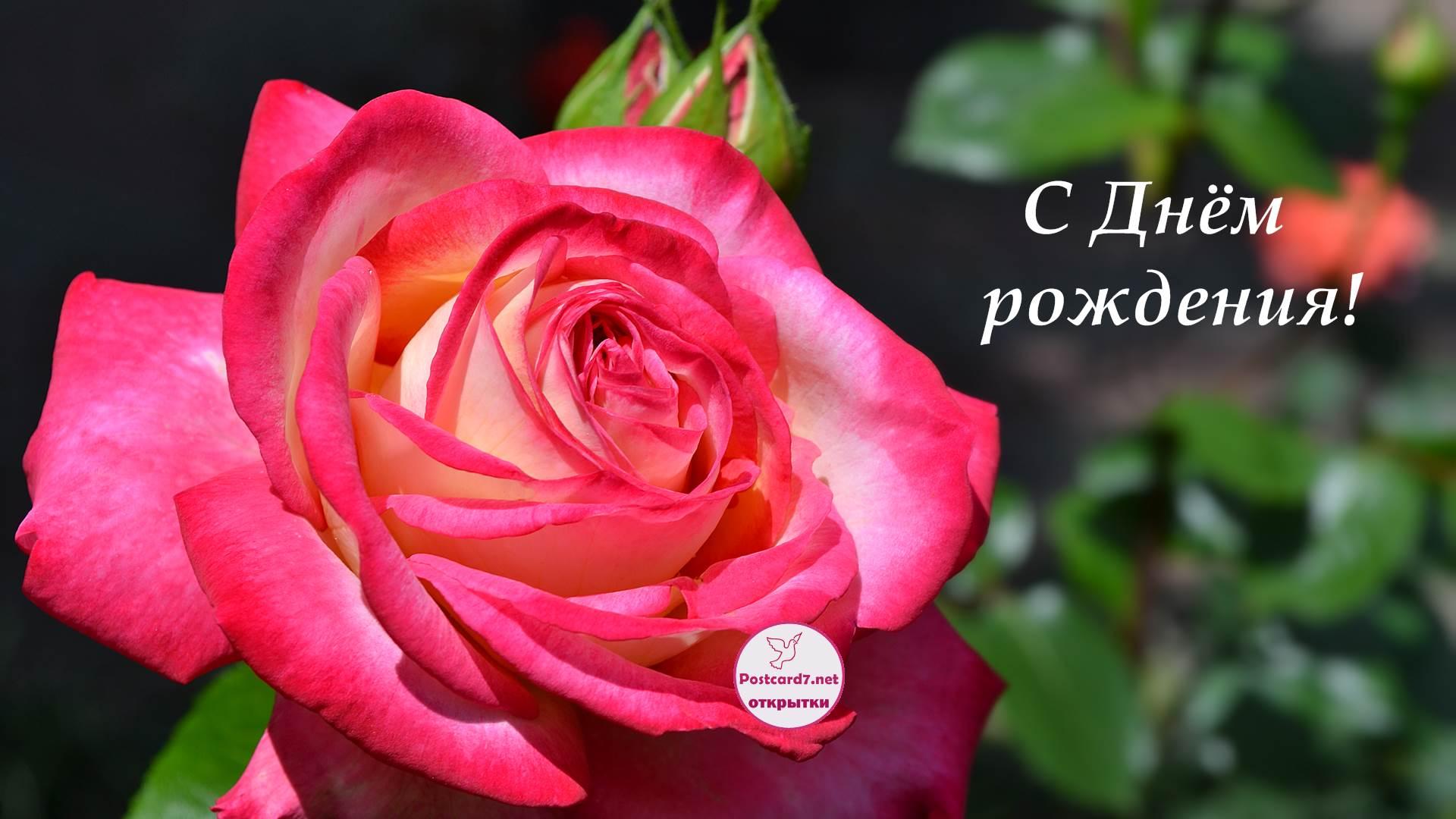 Открытка с днем рождения женщине по имени роза, картинки