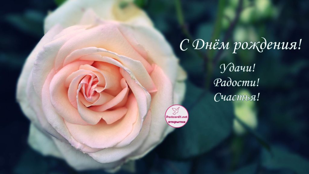ДР открытка, эффектная роза