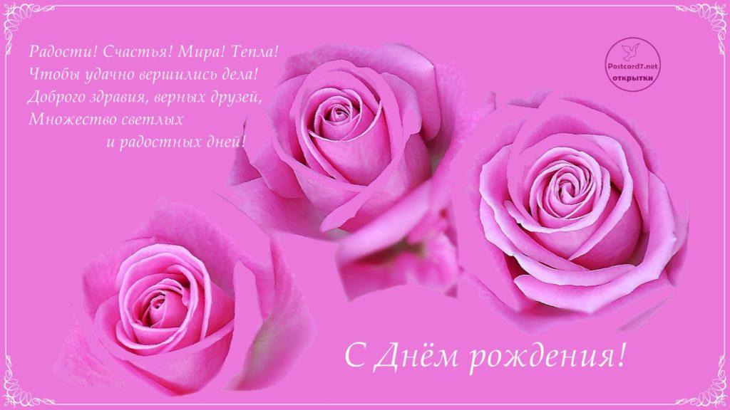 Открытка с Днём рождения, розы розовые