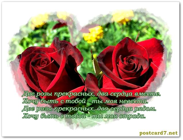 розы, открытка для влюблённых