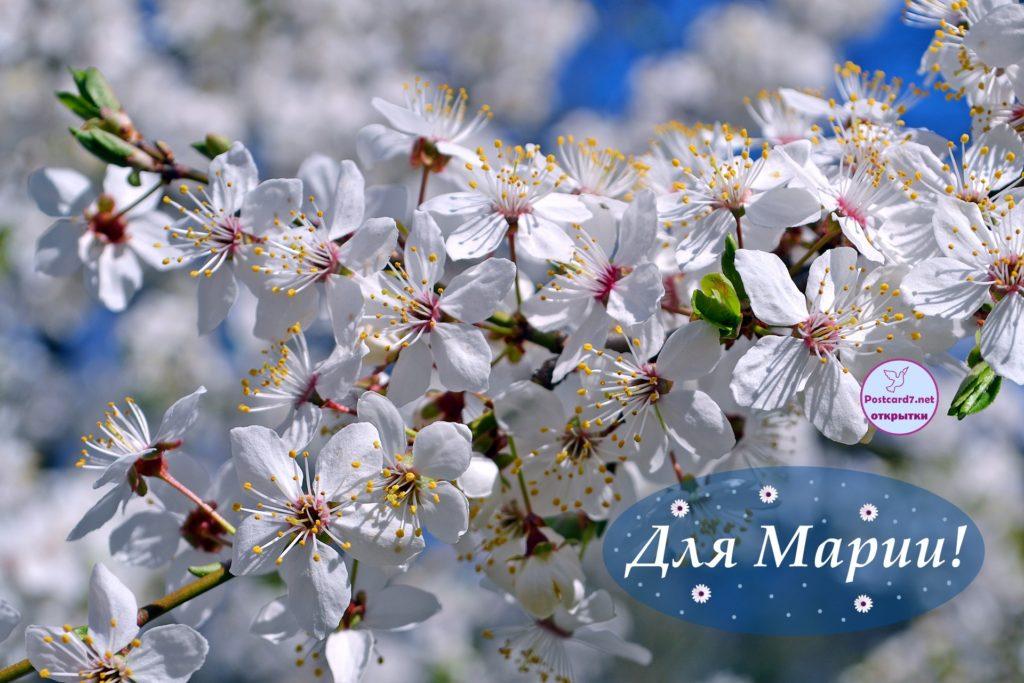 Открытка для Марии, весеннее цветение