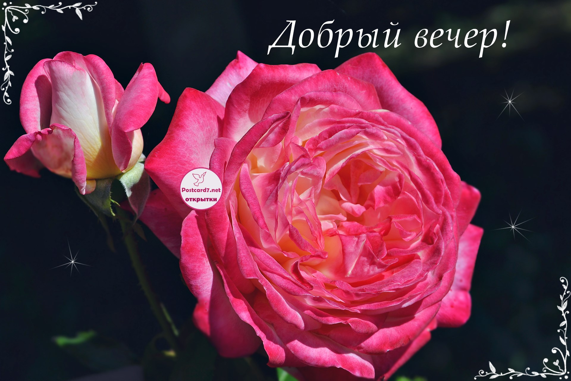 Картинки добрый вечер розы, открытку сайт
