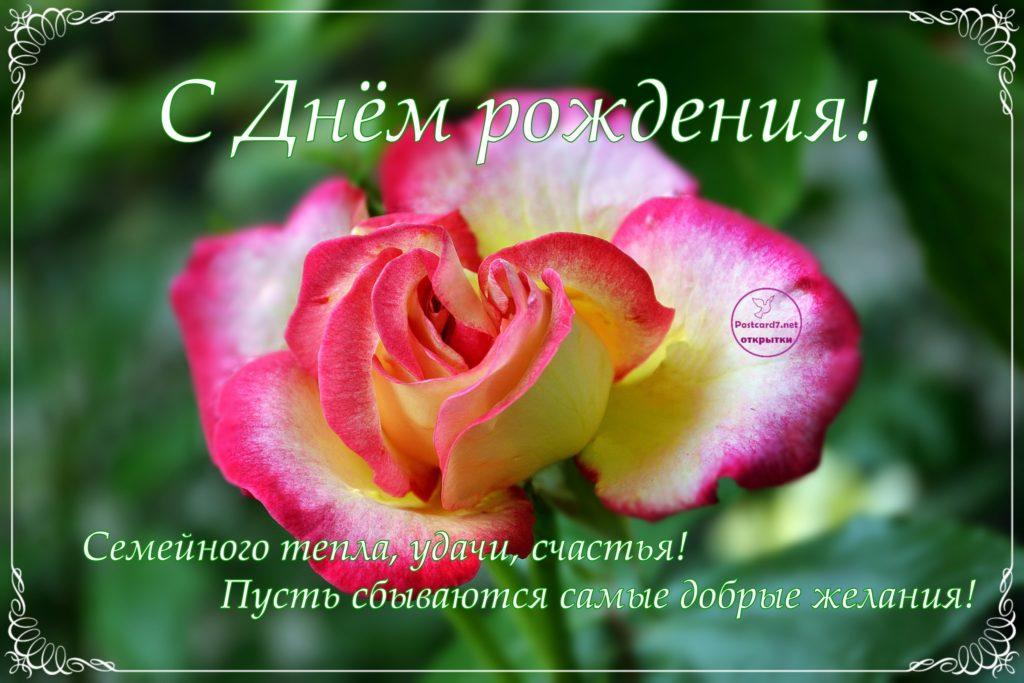 День рождения, яркая роза, открытка