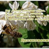 пчела за работой, вдохновения
