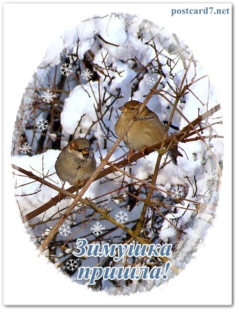 Зимняя открытка , Воробьи