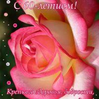 красивая роза, открытка на 60 лет, пожелания