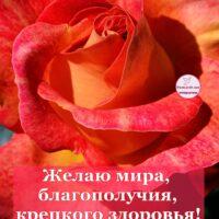 Открытка с красивой розой и пожеланиями крепкого здоровья