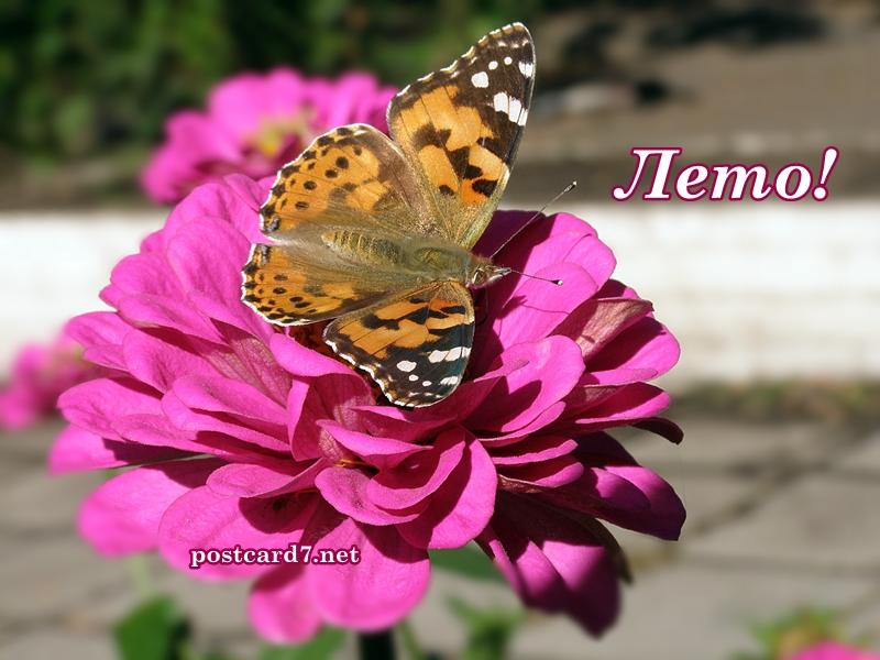 Лето, открытка, бабочка на цветке