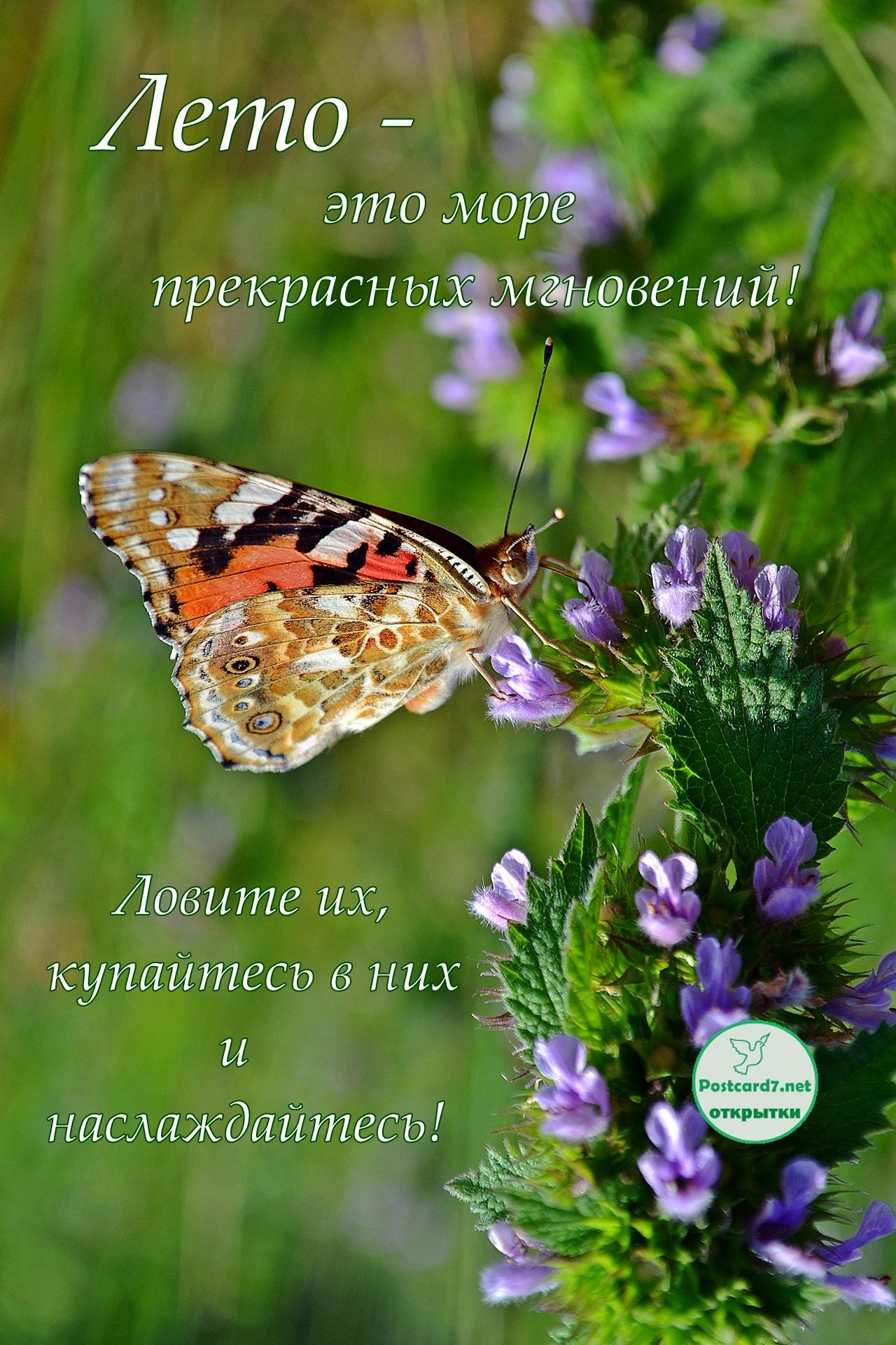 Лето прекрасных мгновений, открытка с бабочкой