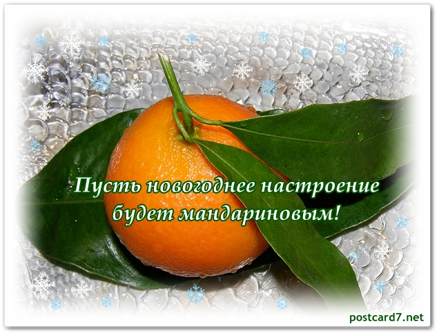 новогодняя открытка, мандарин