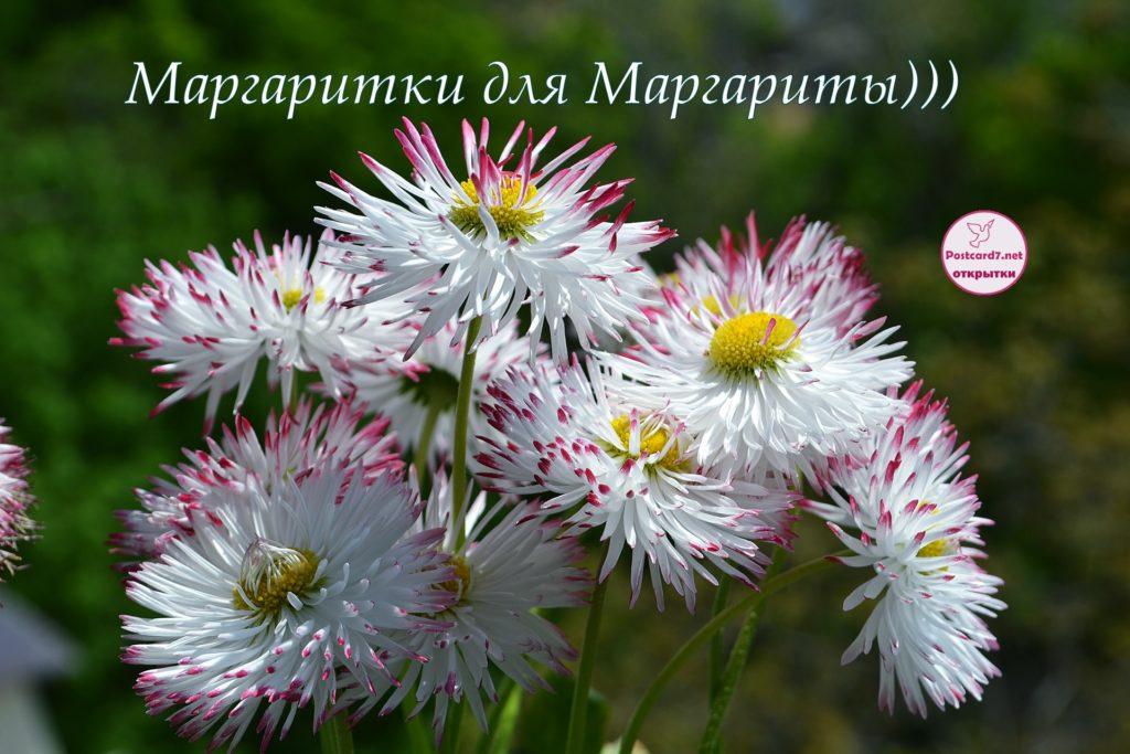 Маргаритки для Маргариты, именная открытка