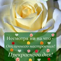 Несмотря ни на что - Отличного настроения! Открытка с белой розой