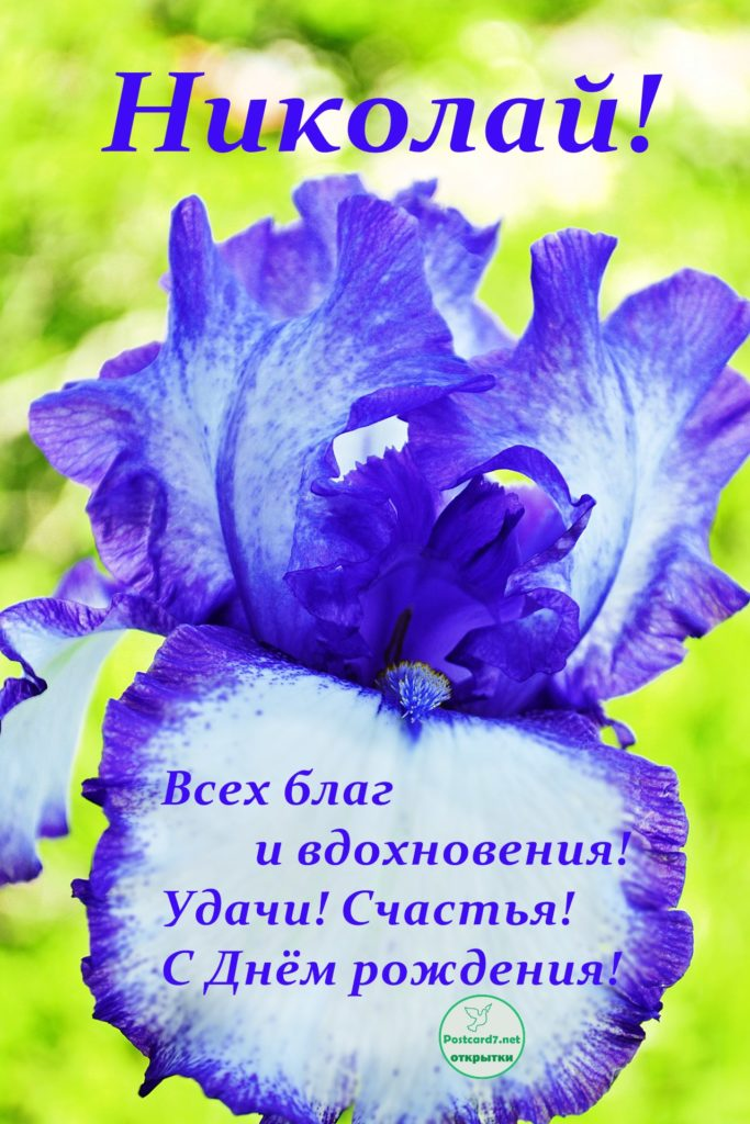 Сиренево-белый ирис - открытка для Николая с Днём рождения