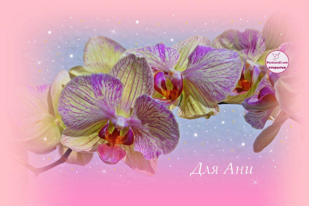 Для Ани. Открытка. Жёлто-сиреневые орхидеи в розовой рамочке.