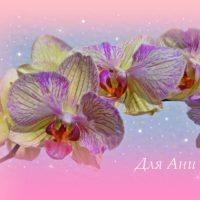 Открытка для Ани, жёлто-сиреневые орхидеи