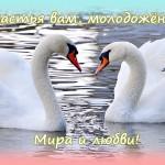 свадебная открытка лебеди