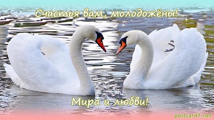 Лебеди на открытках