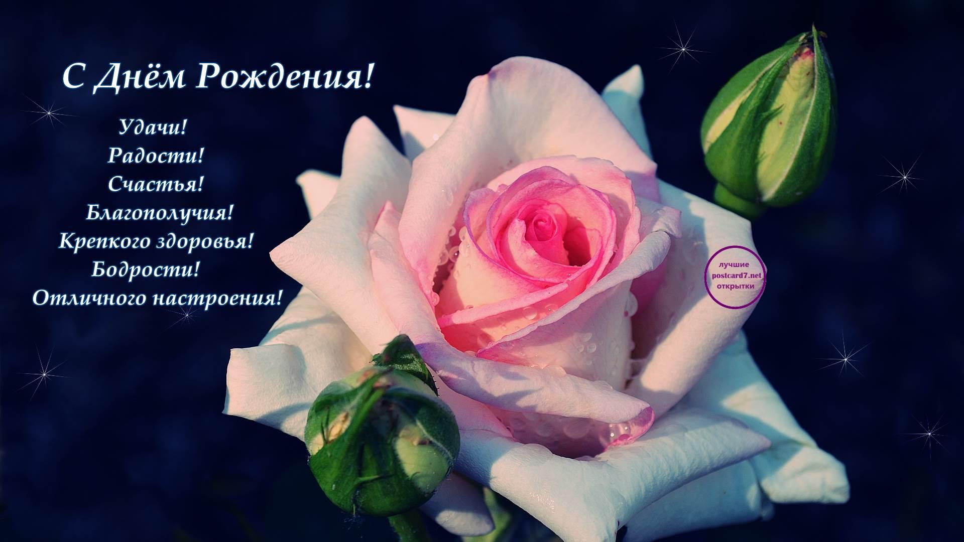 Открытка с пожеланиями - Роза в росе - на День Рождения, фото-обои 1920-1080