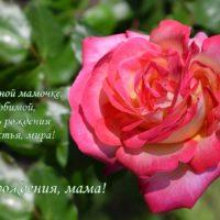 Открытка с Днём рождения маме, роза, стихи