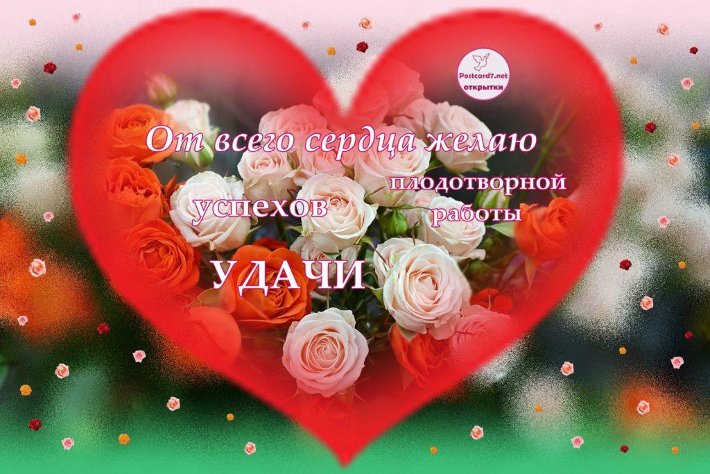 Плодотворной работы, открытка с розами