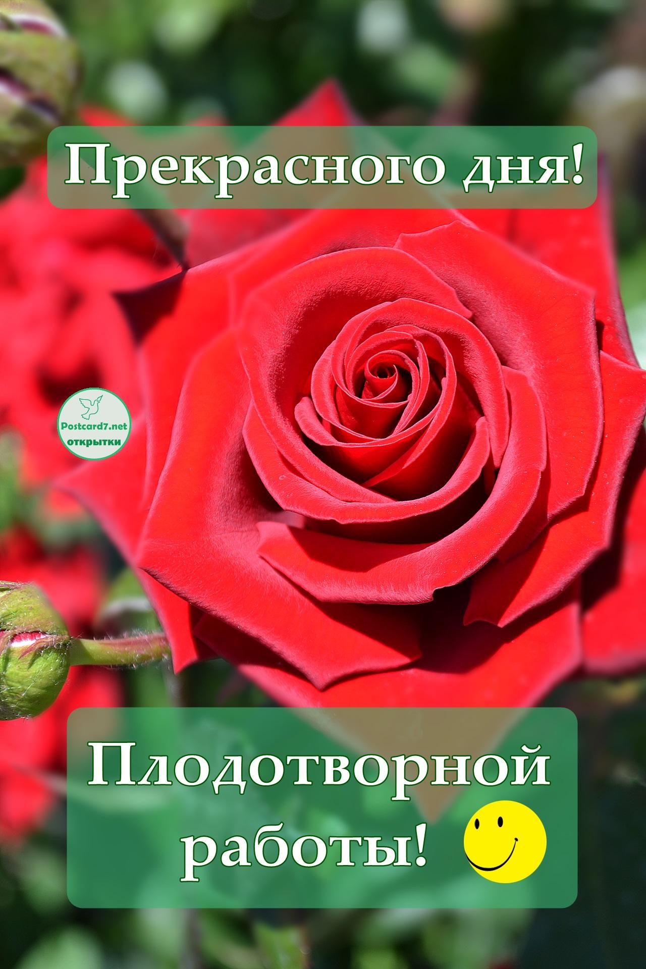 Прекрасного дня, плодотворной работы, открытка