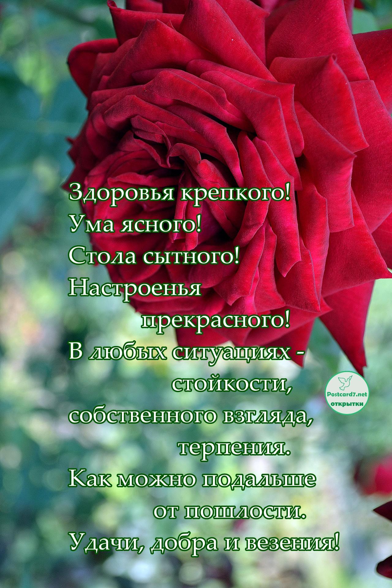 Пожелания в стихах, открытка с розой