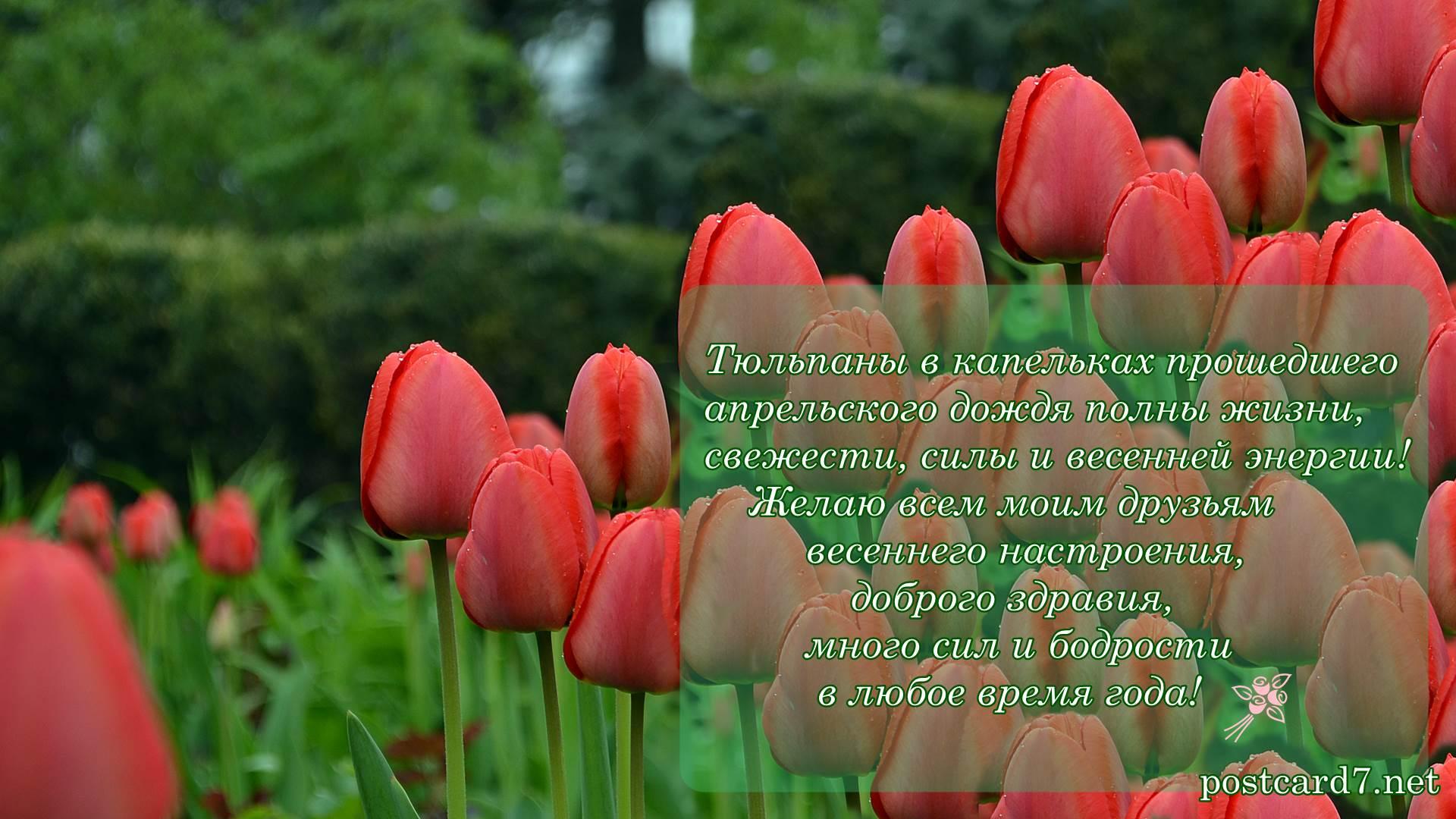 Пожелания друзьям, открытка с тюльпанами