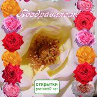 Поздравляем, открытка разноцветные розы
