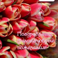 тюльпаны, открытка поздравительная