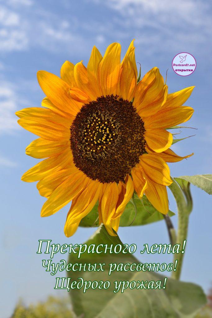 Летняя открытка с подсолнухом