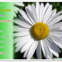 Радостного лета, ромашка, открытка с пожеланиями