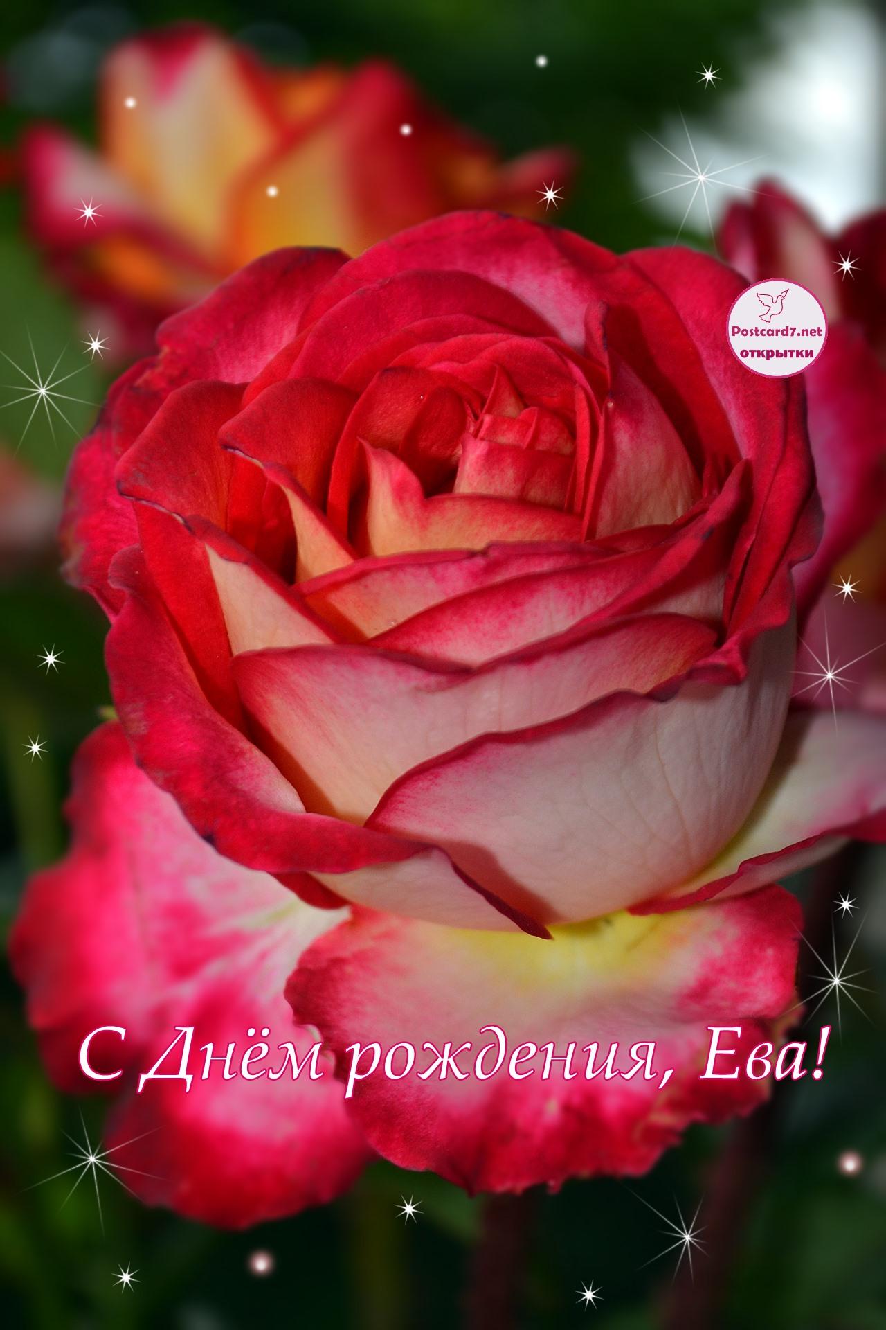 Роза, Ева, С Днём рождения, открытка