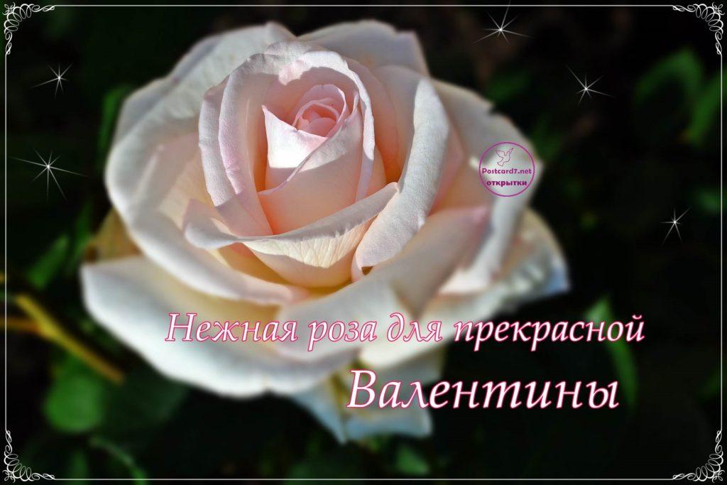 Роза для Валентины, открытка