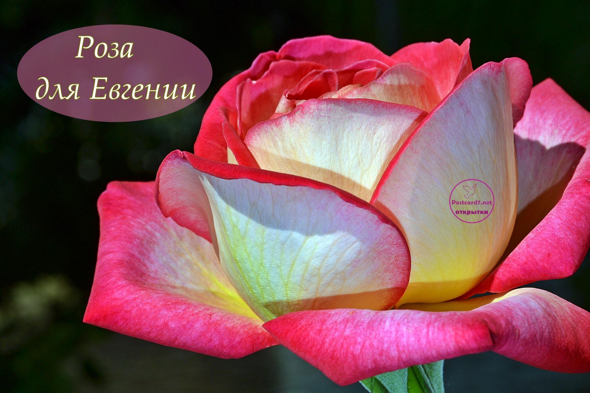 плеер розы и открытки для женечки депутаты решили