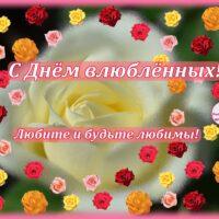 Открытка с розой и множеством мелких розочек, 14 февраля