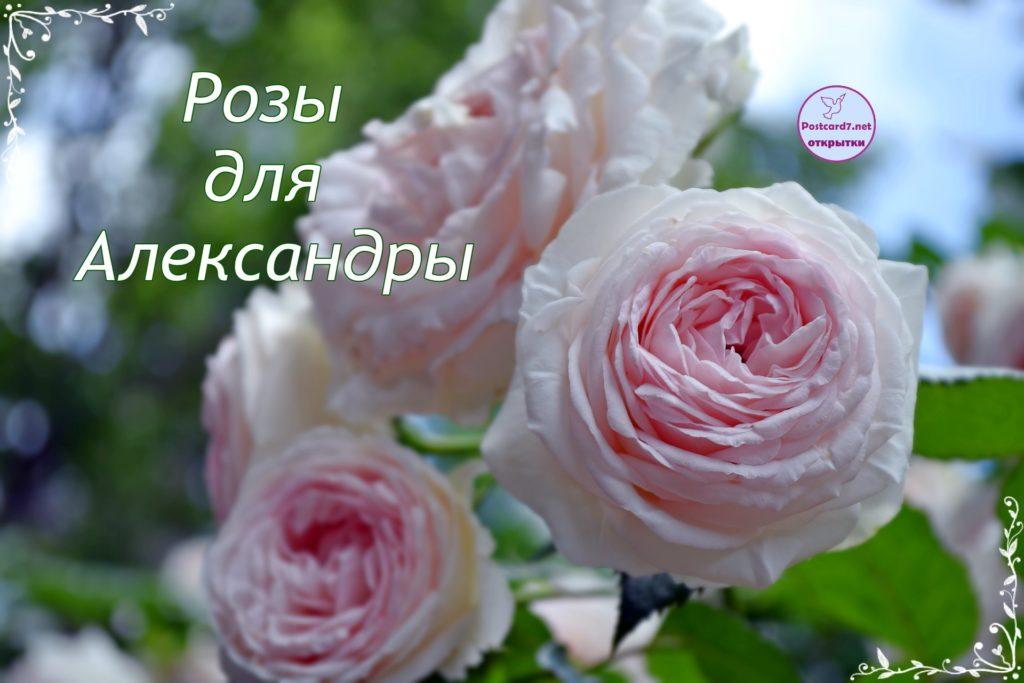 Розы для Александры, именная открытка