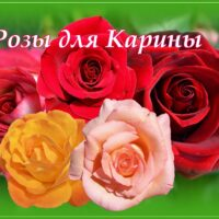 Пять разноцветных роз для Карины, открытка