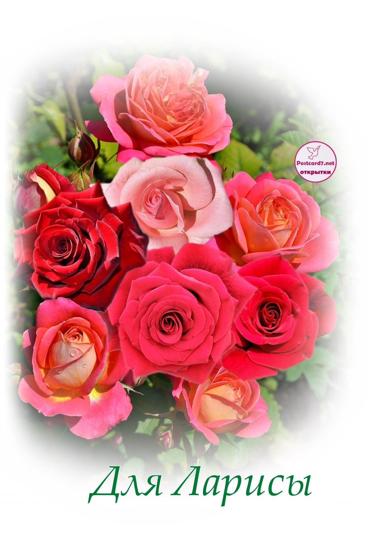 красивая открытка с розами с днем рождения лариса