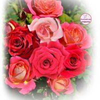 9 роз для Ларисы - вертикальная открытка