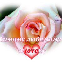 Самому любимому человеку. Открытка с розой и сердечком