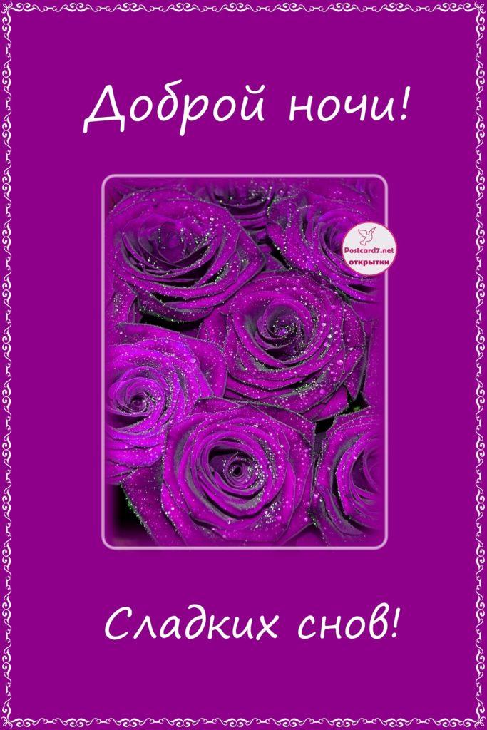 Сладких снов, фиолетовые розы, открытка