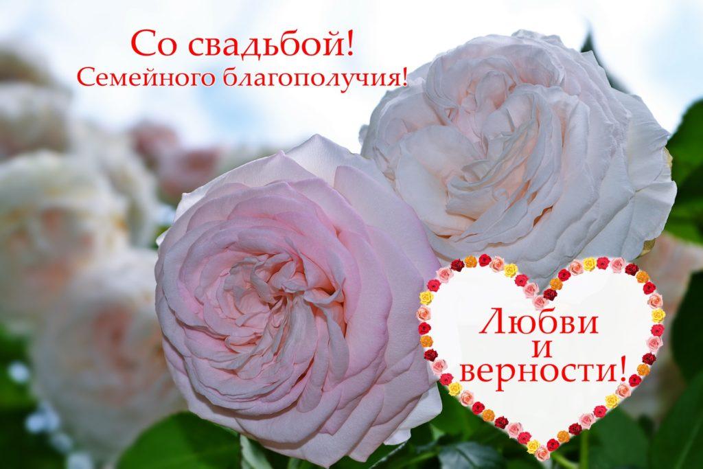 Две розы и сердечко. Свадебная открытка с пожеланиями